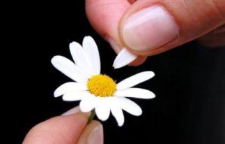 http://qifanabki.files.wordpress.com/2009/04/she-loves-me-she-loves-me-not.jpg